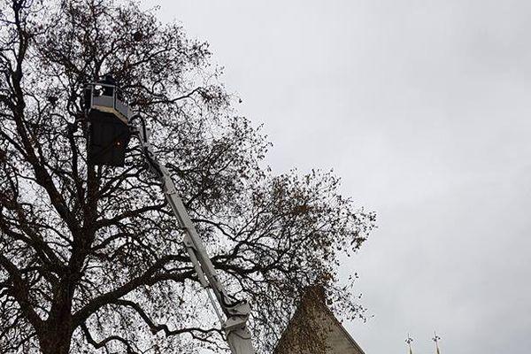 Les sapeurs-pompiers ont neutralisé un nid de frelons asiatiques dans le jardin du Musée départemental de l'Oise