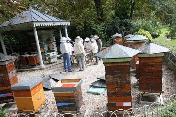 Des élèves de la société d'apiculture récoltent le miel du rucher du jardin du Luxembourg.