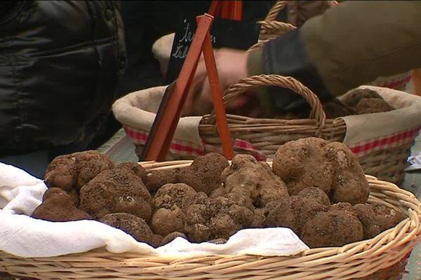 La truffe est un champignon très recherché