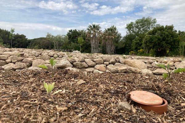 Les oyas sont des pots en argiles. Recouverts de paillage, ils permettent d'économiser l'eau de pluie qu'ils contiennent puisqu'elle ne s'évapore pas.