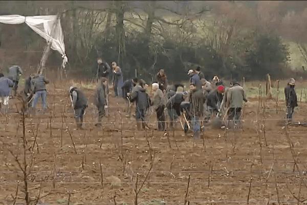 Une centaine de pomiculteurs du Limousin aide un collègue de Corrèze