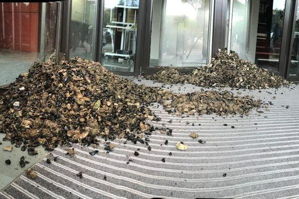 Les ostréiculteurs du bassin de Thau ont déversé quantité de coquilles d'huîtres devant les portes de l'Agence régionale de Santé - lundi 13 janvier 2020.