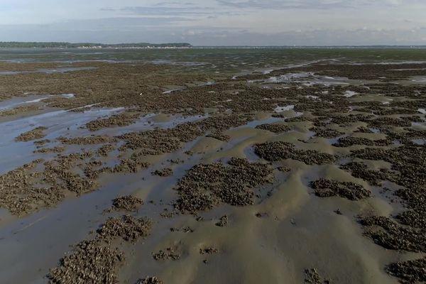 Les friches ostréicoles s'étendent sur 1000 hectares dans le bassin d'Arcachon