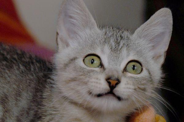 Un chaton suspecté d'être porteur du virus d ela rage recherché à nantes (illustration)