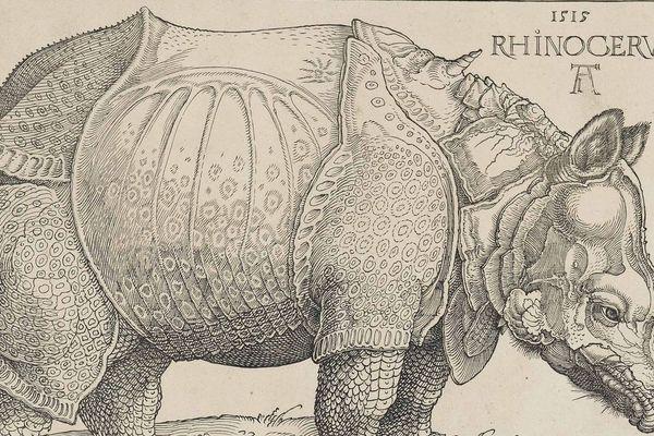 Le Rhinocéros, gravure réalisée en 1515 par Dürer, conservée au British Museum (Londres).