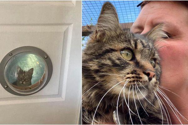 L'hôtel pour chat d'Ophélie vit une période compliquée pendant le confinement à Loisy-sur-Marne