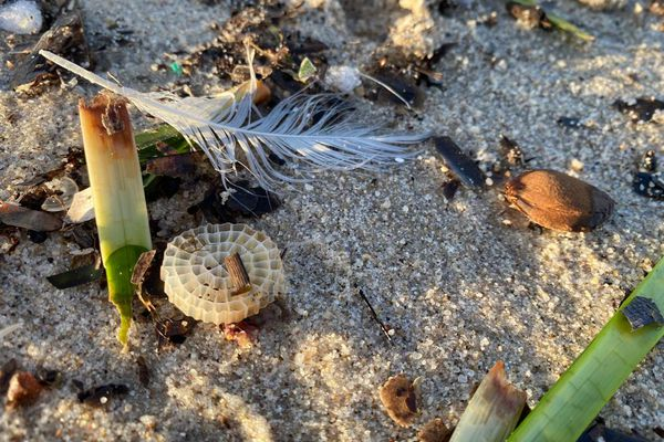 Des filtres en plastique parmi les déchets rejetés par la mer sur une plage de Juan-les-Pins.