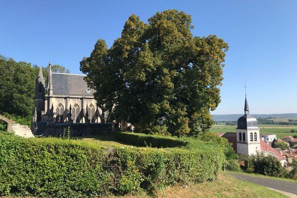 """Le tilleul planté ici à Vaucouleurs il y a 600 ans a été reconnu """"arbre remarquable""""."""