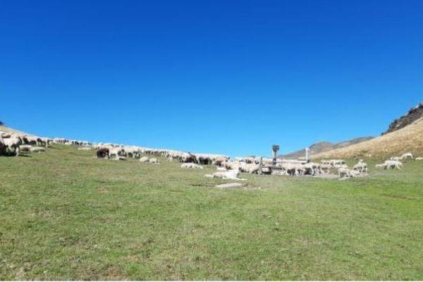 Estive d'Ourdouas (commune de Sentein)