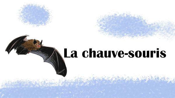 La chauve-souris, animal totem des fortifications de Langres