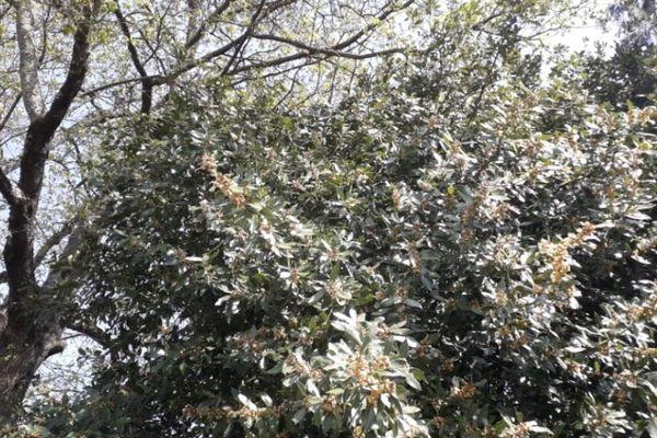 La nature explose et les pollens sont de retour...
