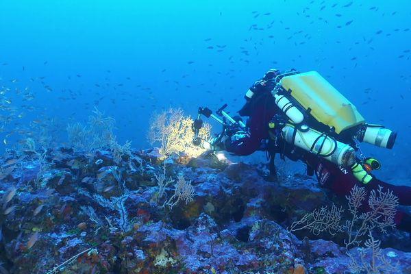 Laurent Ballesta et son équipe étudient les anneaux de corail situés au large du Cap Corse.
