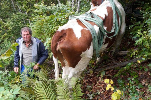La vache de 560 kg s'est aventurée en terrain dangereux et son éleveur ne pouvait l'extraire seul de là.