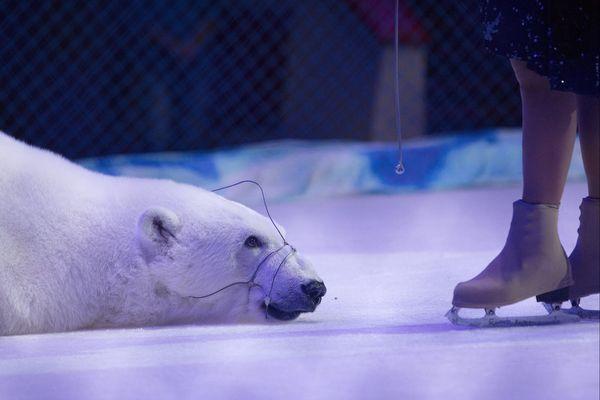 Un ours polaire et sa dresseuse Yulia Denisenko. Le cirque des ours blancs serait le seul cirque du monde à mettre en scène des ours polaires. La totalité du spectacle se déroule sur glace et les ours sont muselés. Kazan, Russie.