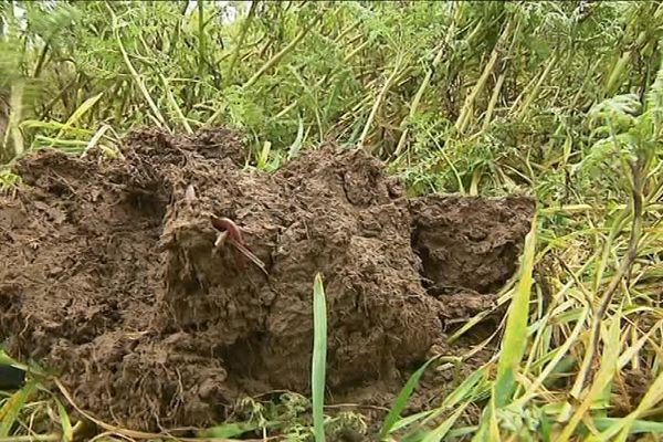 Cette motte de terre est riche en vers de terre. Ils permettent d'assurer une meilleure évacuation des eaux de pluie dans les sols.