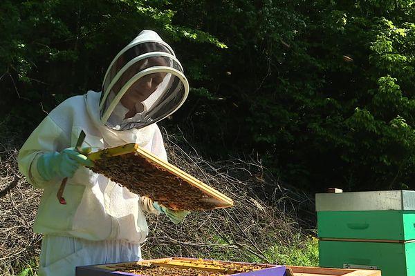 Après 13 ans de carrière en Suisse, Anne-Emilie Sordel a choisi de venir apicultrice dans le Jura.