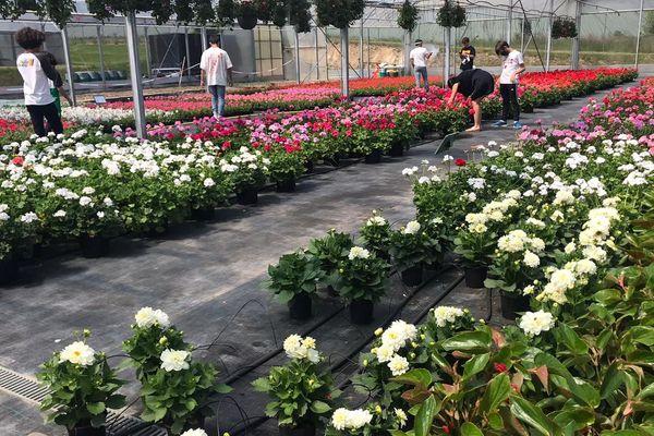 Les clients de retour dans les serres des horticultures