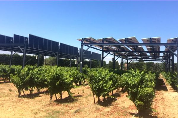A Piolenc, des panneaux solaires ont été installés sur deux parcelles de vigne à titre expérimental.