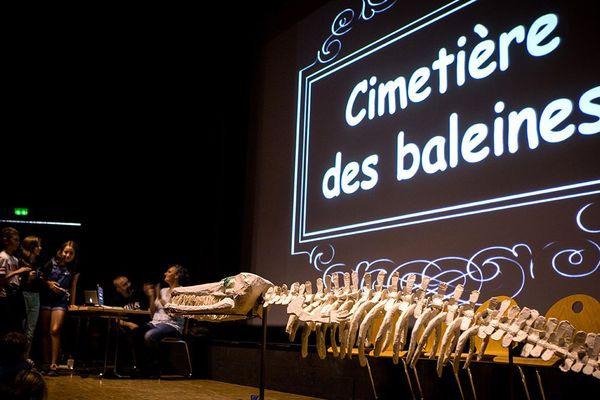 Le squelette d'une baleine reconstitué par les élèves de l'école André Pic de Port-la-Nouvelle