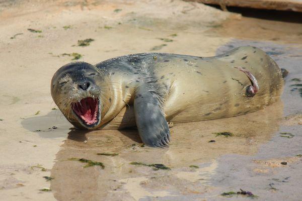 Le bébé phoque est né ce week-end dans le parc animalier de la Côte d'Azur.