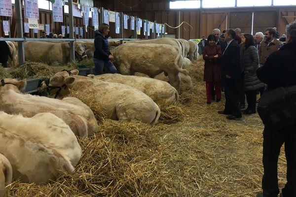 La loi alimentation et les menus végétariens dans les cantines scolaires se sont invités au menu de ce 33e concours interdépartemental de Charolais reproducteurs à Saint-Gervais d'Auvergne