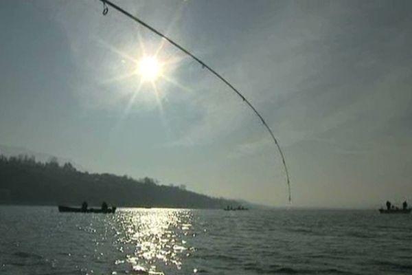 Le lac du Bourget regorge de poissons.
