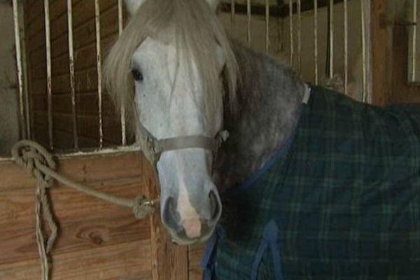 Le salon du cheval commence ce week-end à Paris Nord-Villepinte.