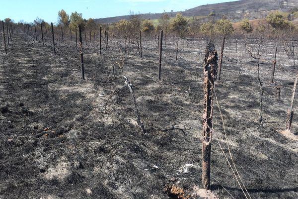 Gard - Le feu, parti de la forêt derrière Générac, est fixé depuis quelques heures - 31 juillet 2019.