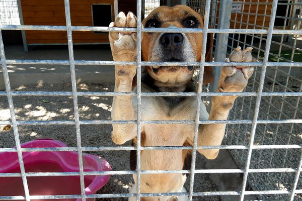 Un chien abandonné à la SPA.