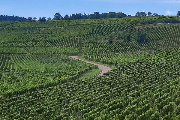 Vignoble en Alsace