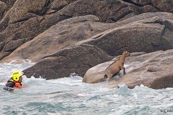 Le plongeur s'est jeté à l'eau pour guider l'animal vers la falaise