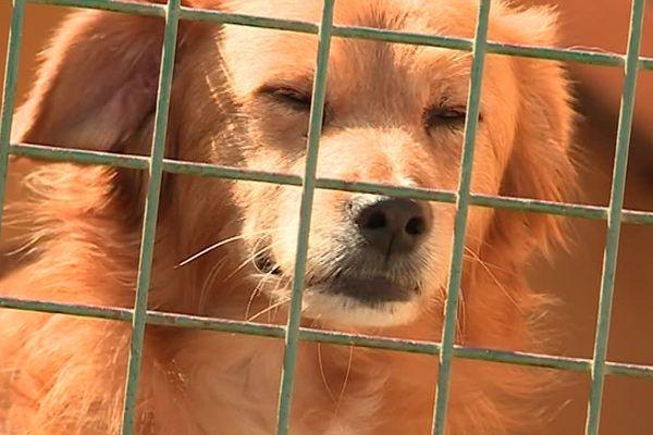 En France, un chien se perd toutes les 21 minutes - juillet 2017