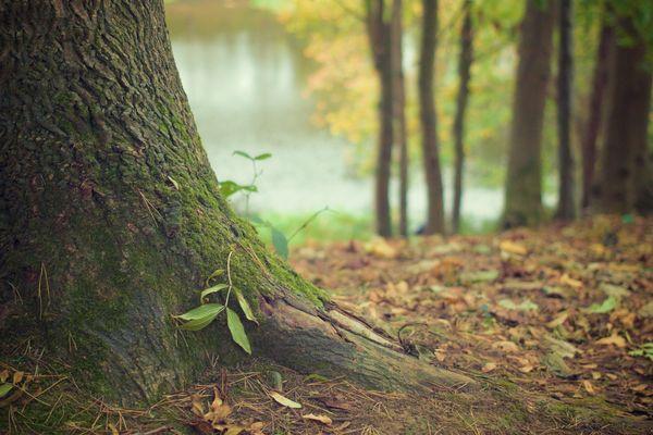 De nombreuses forêts de la région sont classées sites Natura 2000
