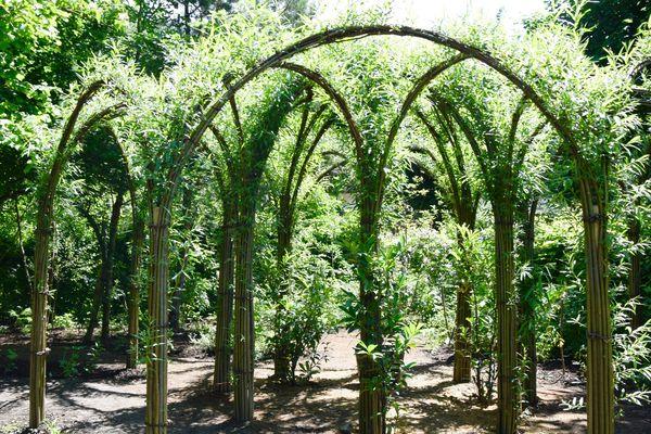 Luc Schuiten puise son inspiration dans le monde végétal