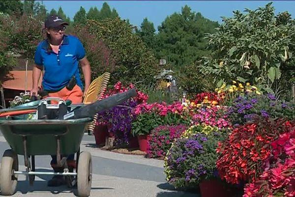 Les jardiniers du parc floral Terra Botanica partagent leurs astuces pour garder les plantes au frais pendant la canicule