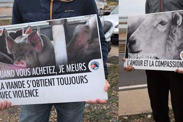 Des panneaux de l'association Toulouse Animal Save