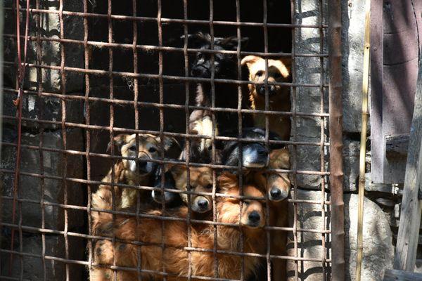 Certains chiens s'entassaient derrière des grilles