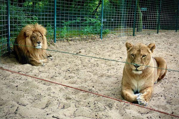 Masaï et Shenna cohabitent désormais dans le même enclos
