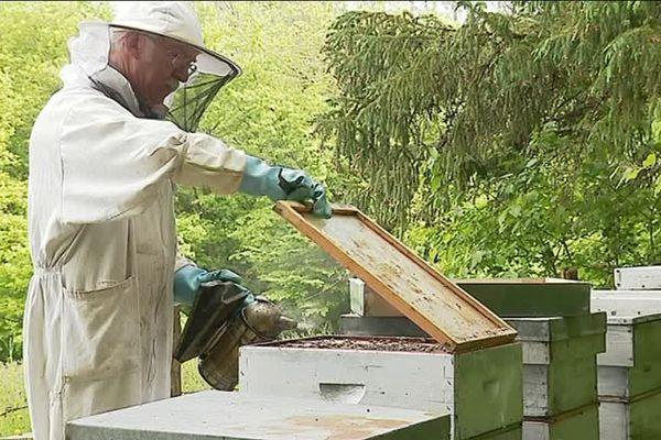 Sur la trentaine de ruches qu'il possède, Michel Mesnier en a perdu 13.