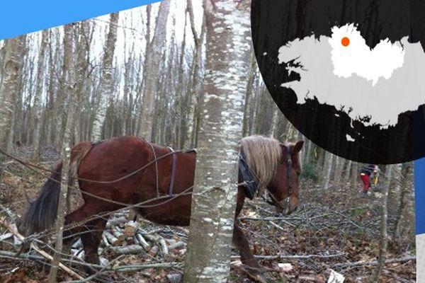 Dans la forêt, le trait breton permet d'évacuer le bois