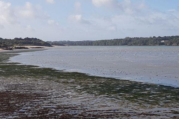 L'automne est bien là, avec l'arrivée des oies Bernache à Saint-Jacut-de-la-mer (22)
