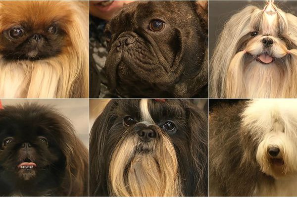 Salon canin Troyes (02/02/2014)