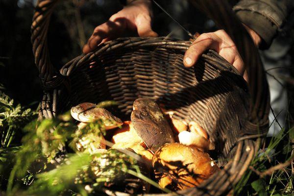 La saison des champignons a commencé, mais attention à ne pas vous égarer !