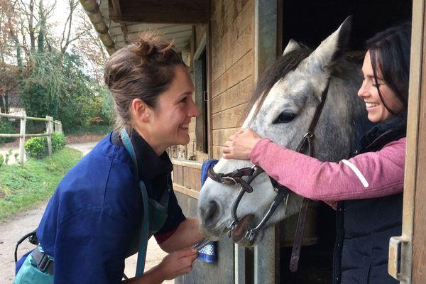Soigner les dents des chevaux...un métier à part entière