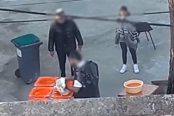 L214 a porté plainte en début de semaine auprès du procureur de Marseille, et rappelle que la mise à mort d'animaux dits d'élevage est interdite en dehors d'abattoirs agréés.