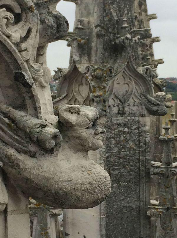 Monstre ailé dans les hauteurs de St Jacques