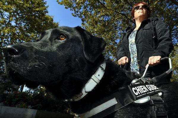 Depuis le 11 février 2005, autoriser l'accès aux chiens guides dans un lieu ouvert au public est obligatoire.