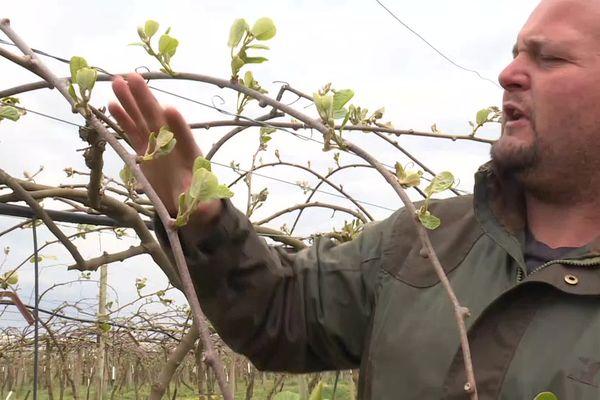 Cet arboriculteur du Lot-et-Garonne a perdu la quasi totalité de ses récoltes de kiwis, de prunes et de pommes.