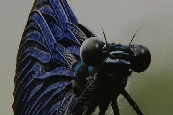 Un papillon photographié, numérisé par Philippe Martin