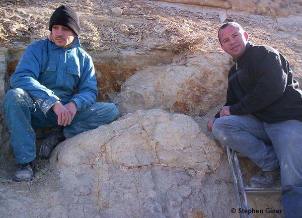 Extraction du fossile de la tortue sur la commune de Barjols dans le Var.